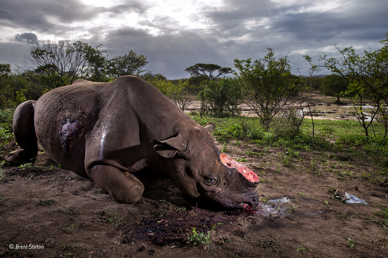 Ganadores del Wildlife Photographer of the Year 2017 8